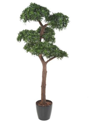 Podocarpus Bonsai (UV-Beständig), ca. 210cm