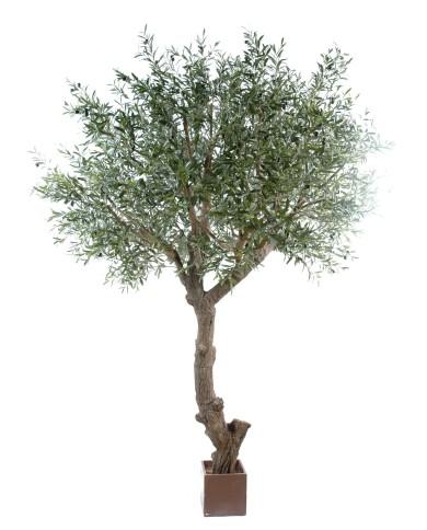 Olivenbaum Giant, ca. 270cm
