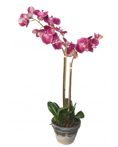 Premium (3d) Phalenopsis violett, ca. 85cm
