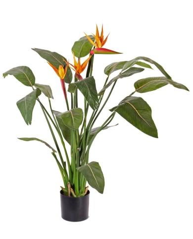 Strelitzia, Paradiesvogelblume, ca. 110cm