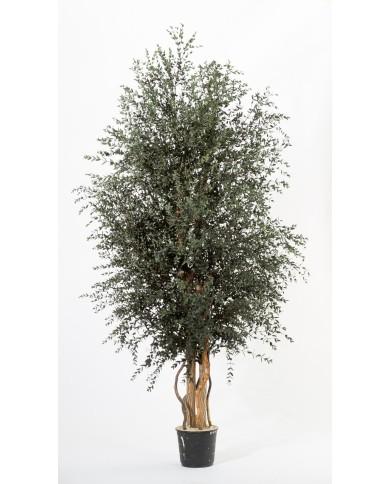 Konservierter Bambus Baum - Parvifolia, ca. 180cm