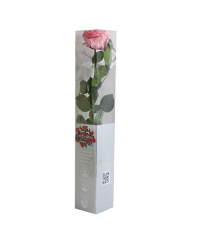 Stabilisierte Rose Premium, rosa (Geschenk-Karton)