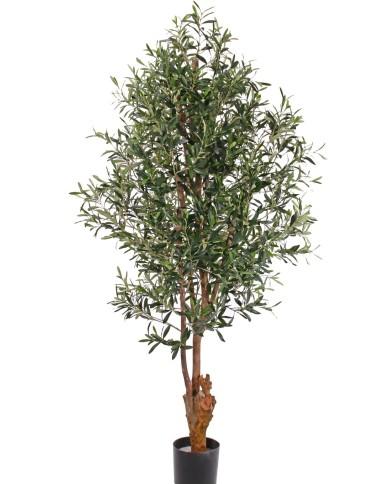 Olivenbaum, ca. 170cm (UV-Beständig)