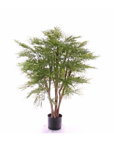 Mimosenstrauch (Acacia dealbata), ca. 110cm (UV-Beständig)