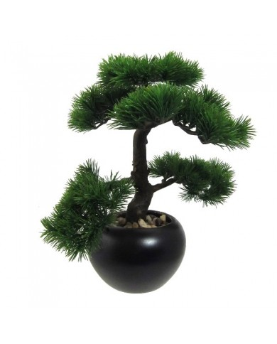 "Bonsai ""Kiefer"" ,ca 37cm"