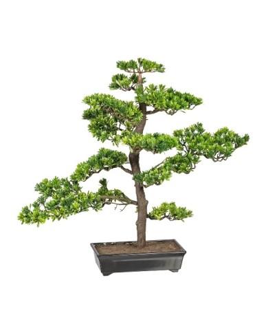 Bonsai Podocarpus, ca 63cm, grün