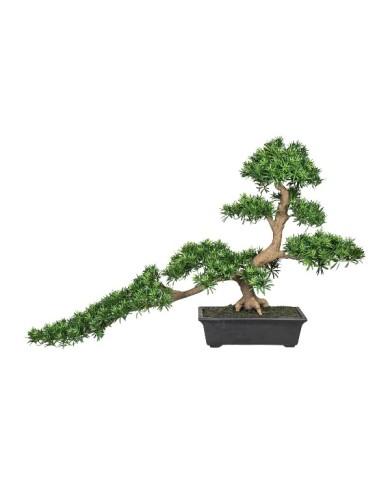 Bonsai Podocarpus Han-kengai, ca 85cm