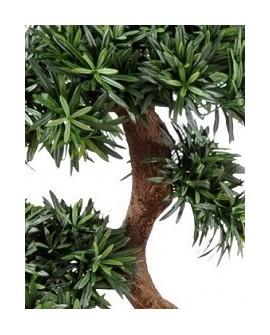 Tempelbaum - Podocarpus