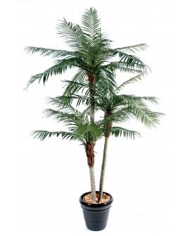 Palmiers de Phoenix