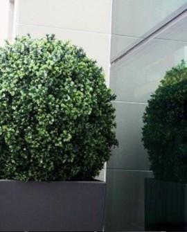 Outdoor Pflanzen